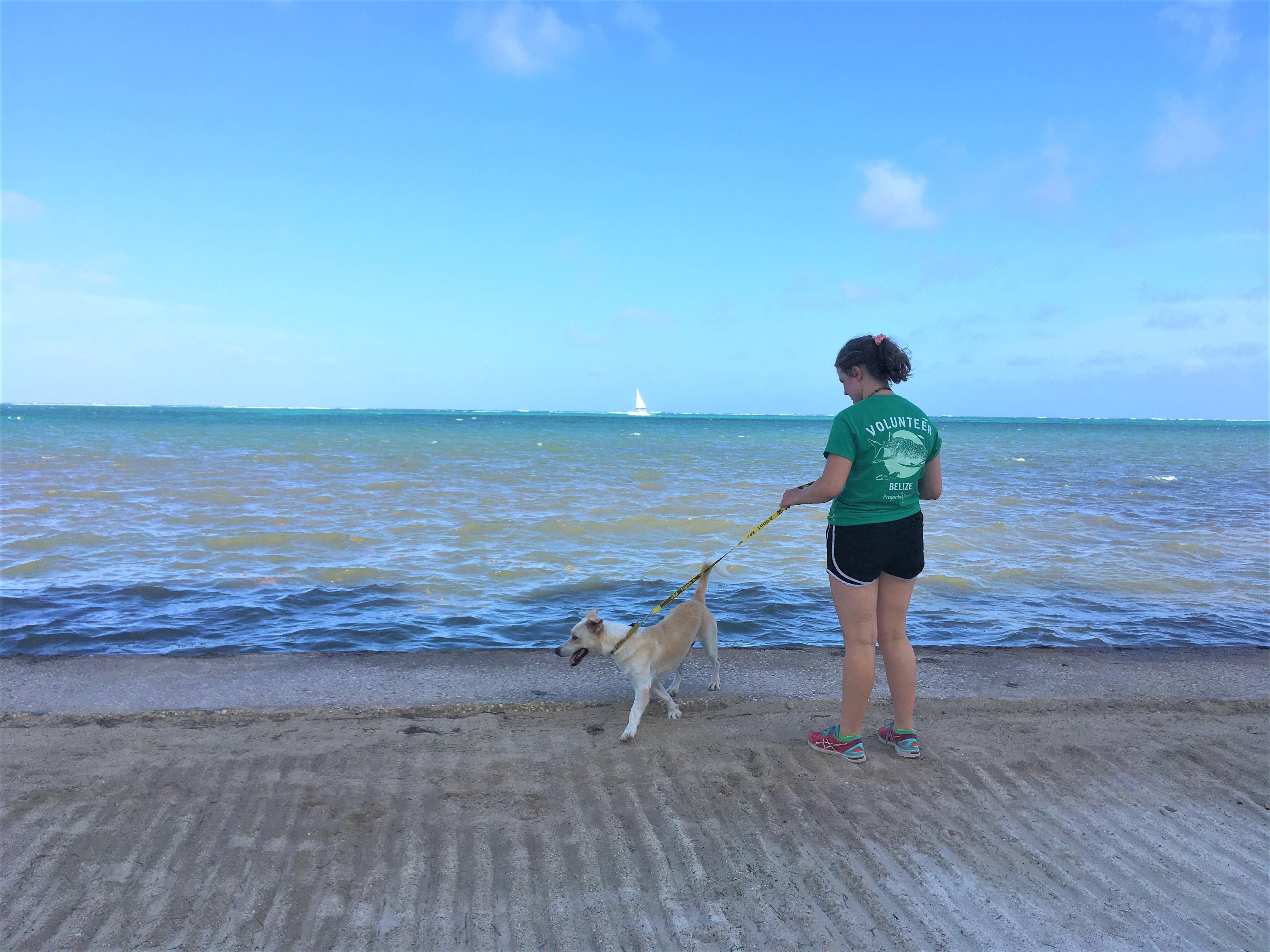 A volunteer with animals in Belize take a shelter dog for a walk along the beach